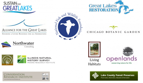 Featured Image for Great Lakes Ravine Restoration Toolkit